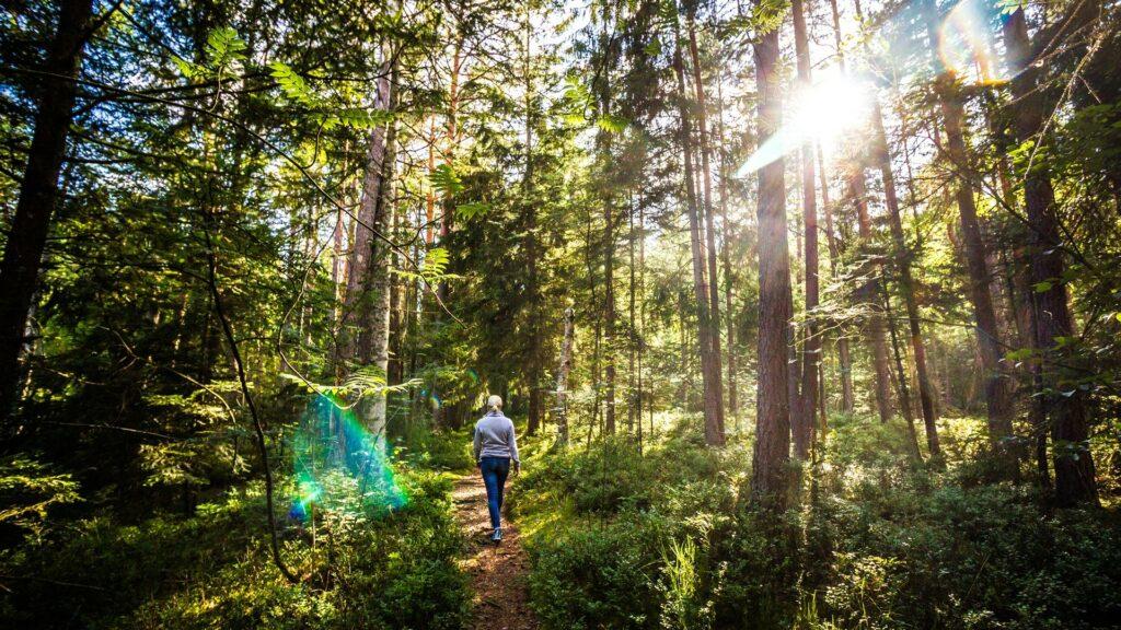 Schwarzwald Naturhighllight Bannwald Wuerzbacher Moor