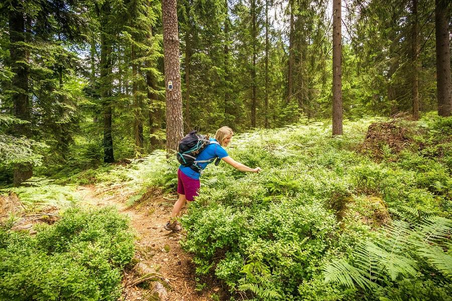 Schwarzwald Enzkloesterle Heidelbeerweg