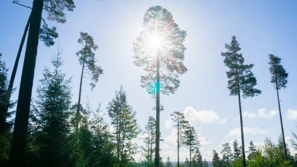 Schwarzwald Wellness Gesundheit Heilklimawandern