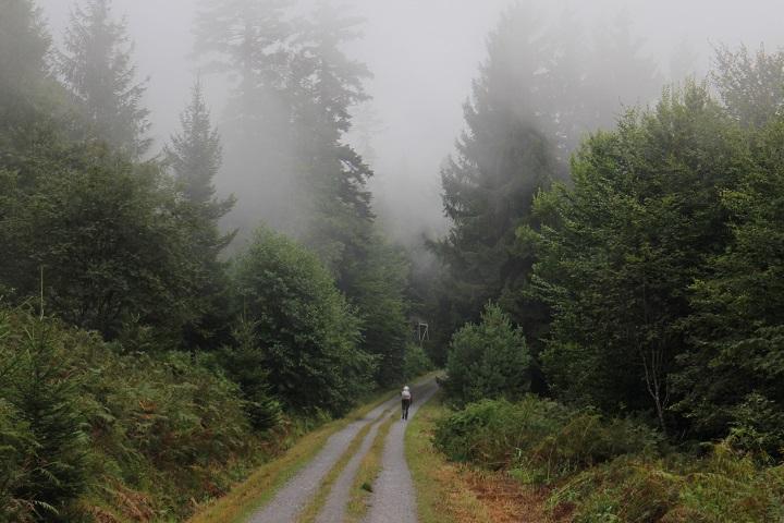 Schwarzwald Wandern auf der Höhe