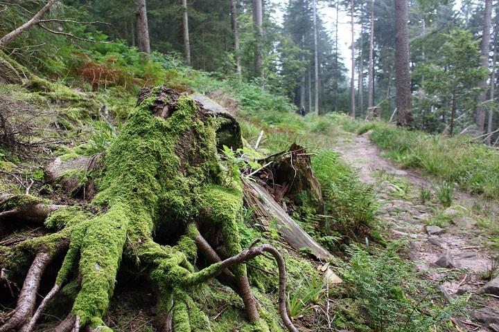 Schwarzwald Grüne Oase